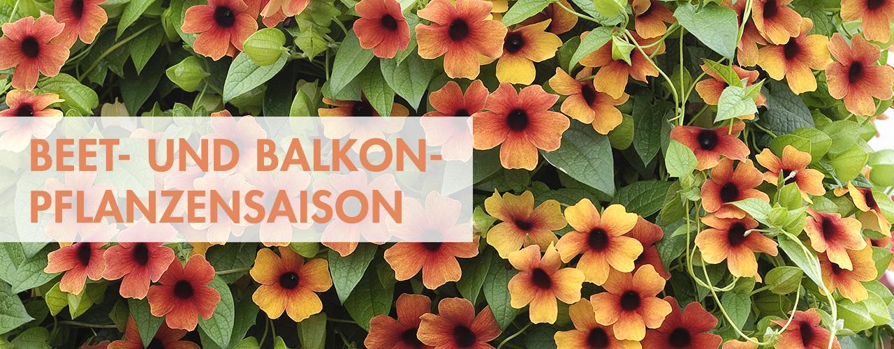 Mit Beet Und Balkonpflanzen Unsere Gartnereien Aus Berlin Und